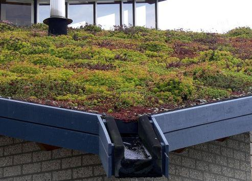Tanch it de toiture terrasse comment a marche - Toiture terrasse vegetalisee ...