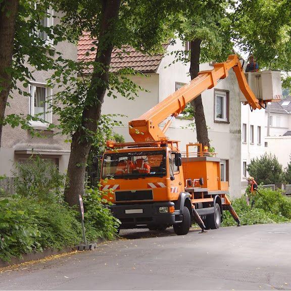 Élagage des arbres CMP
