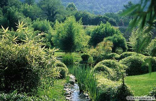 Haie de bambous une id e de plus en plus s duisante - Entretien des bambous ...