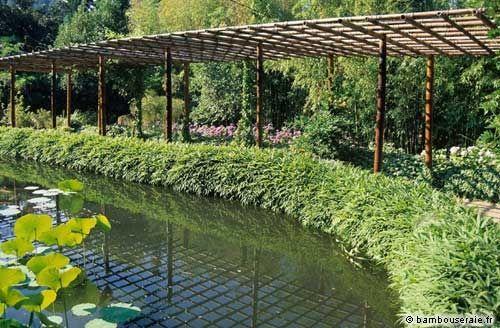 Haie de bambous une id e de plus en plus s duisante for Que peut on faire avec du bambou