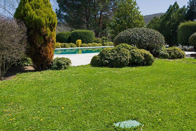 Création de pelouse Travaux.com