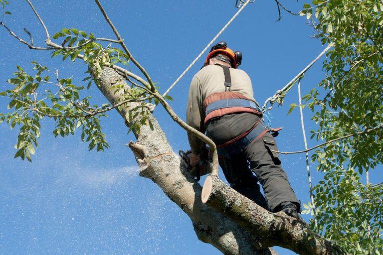 devis abattage arbre