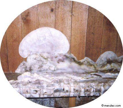 Mousses, moisissures et champignons (mérule) - Travaux.com
