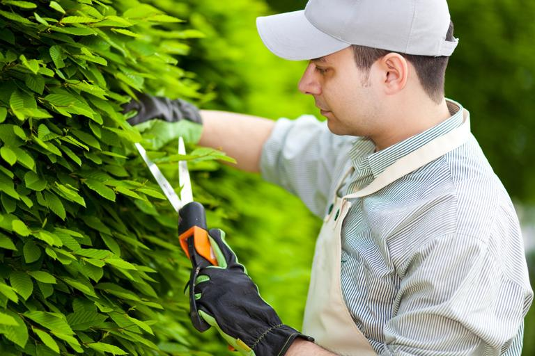 travaux jardinage
